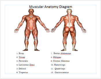 Muscle Guided Notes