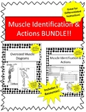 Muscle Id & Actions WS w/ Diagrams BUNDLE!- Great for Practice&Differentiation!