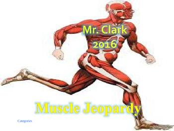 Muscle Jeopardy