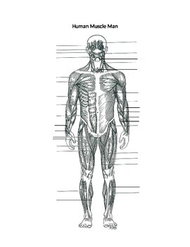 Muscle Man Labeling- front side