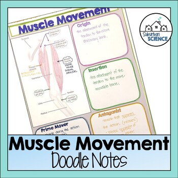Muscle Movement Doodle Notes