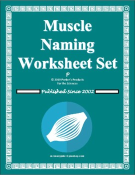 Muscle Naming / Nomenclature Worksheet & Table Set (Muscular System)