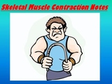 Muscular System Notes - Skeletal Muscle Contraction - Powerpoint Presentation