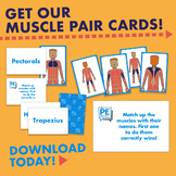 Muscle Pair Cards / Distance Learning