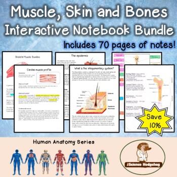 Muscle Skin Bones Interactive Notebook Bundle