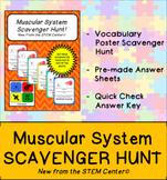 Muscle System Scavenger Hunt