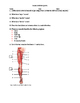 Muscle System Quiz