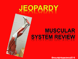 Muscle System Review Jeopardy