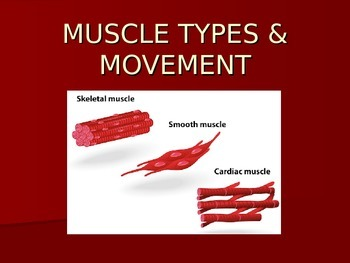 Muscle Types and Movement