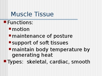 Muscle and Nerve Tissue Presentation