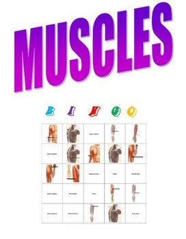 Muscles Bingo