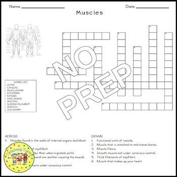 Muscles Biology Science Crossword Coloring Worksheet Middle School