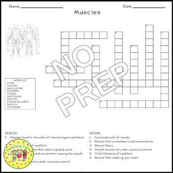 Muscles Crossword Puzzle