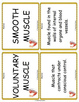 Muscles Vocabulary Cards