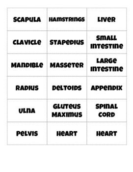 Muscles, Bones & Organs Word Sort