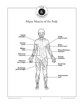 Muscles & Bones Provide Movement & Support