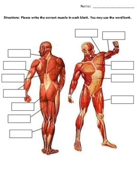 Muscles Quiz (Anatomy)