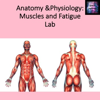 Muscles and Fatigue Lab