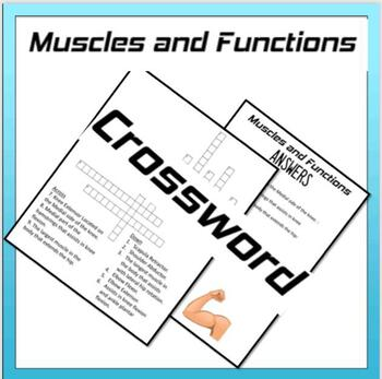 Muscles and their Functions Crossword