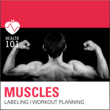 Muscles of the Body: Muscular diagram and Workout Planning- Health / Phys. Ed.