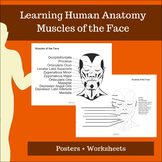 Muscles of the Face - Learning Human Anatomy