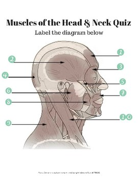 Muscles of the Head and Neck Labeling Quiz