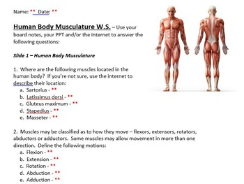 Muscles of the Human Body - Bundled Unit in WORD