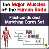 Muscles of the Human Body-Flashcards and Matching Cards Set