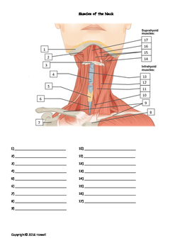Muscles of the neck quiz or worksheet