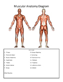 Muscular Anatomy Guided Notes/Study Guide
