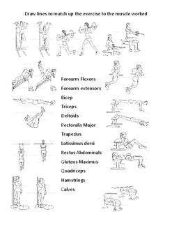 Muscular Skeletal System Worksheet