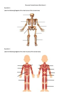 Muscular Skeletal System Worksheet