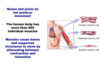 Muscles - The Muscular System (Editable)
