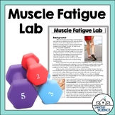 Muscular System Activities - Muscle Fatigue Lab Activity [