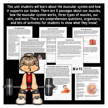 The Human Body - Muscular System - Muscles & Skin {Activities & Flip Book}