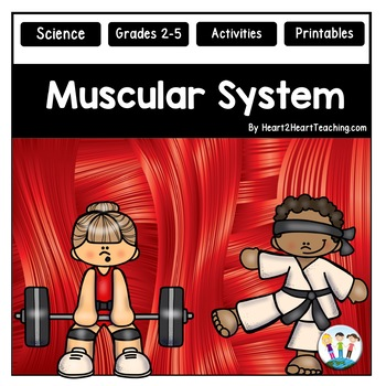 The Human Body - Muscular System - Muscles & Skin {Activit