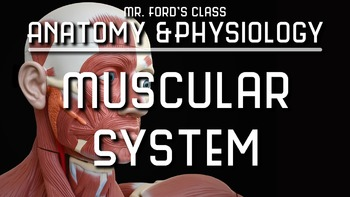 Muscular System: Anatomy and Physiology