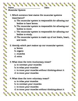 Muscular System Assessment