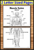 Muscular System - Big Foldable for Interactive Notebooks o