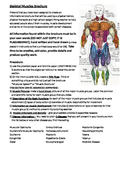 Muscular System Brochure