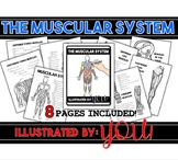 Muscular System Coloring Book- 8 pages of Anatomically Cor