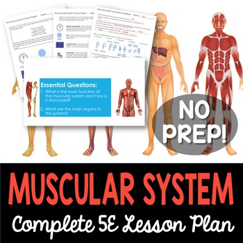 Muscular System Complete 5E Lesson Plan