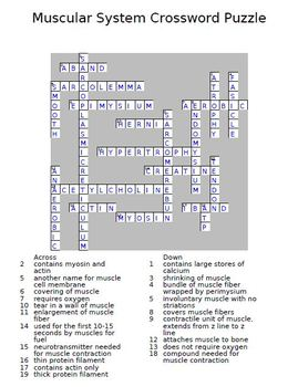 Muscular system crossword puzzle by the teacher team tpt ccuart Choice Image