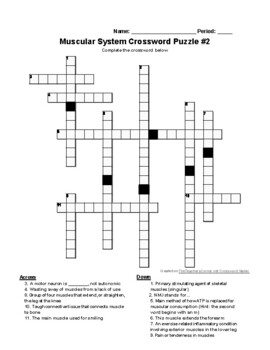 Muscular System Crossword Puzzle Set (Human Anatomy & Physiology)