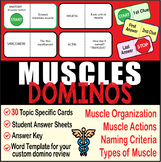 Muscular System ~DOMINO REVIEW~ 30 Cards + Answer Sheets+Key-ANATOMY~Muscles