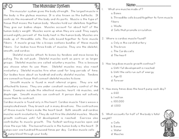 Muscular System Differentiated Nonfiction Reading Passages | TpT