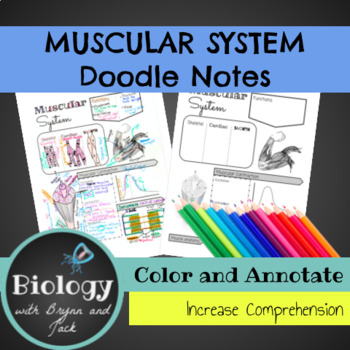 Muscular System Doodle Notes