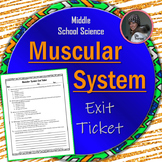 Muscular System Exit Ticket