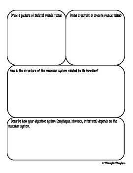 Muscular System Exploration Packet