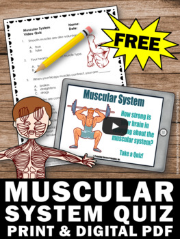 Download Muscular System Worksheet, Human Body Systems Grade 5